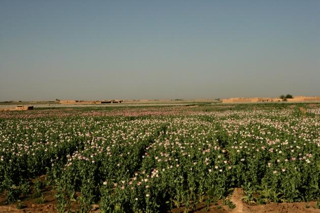 opium-fields-1
