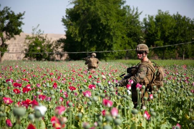 opium-fields-13