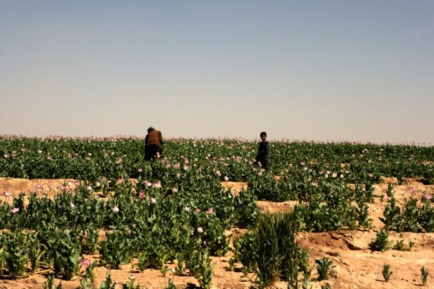 opium-fields-16