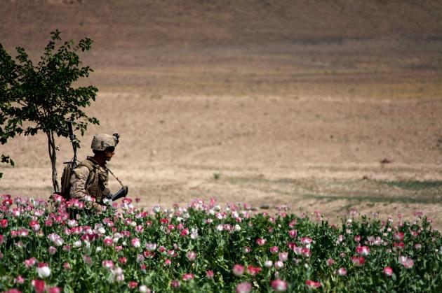 opium-fields-17