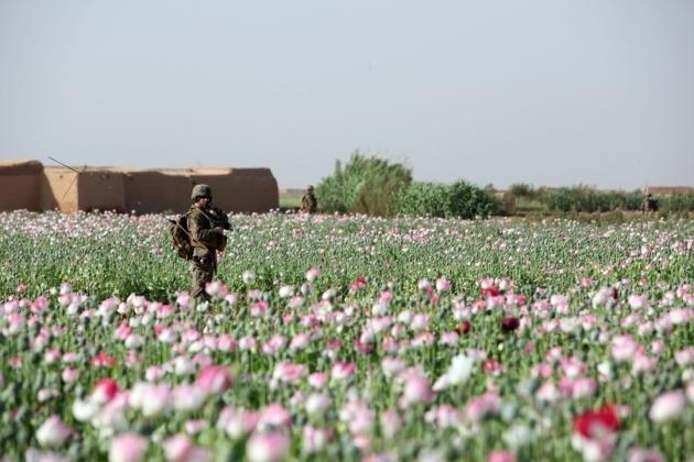 opium-fields-18