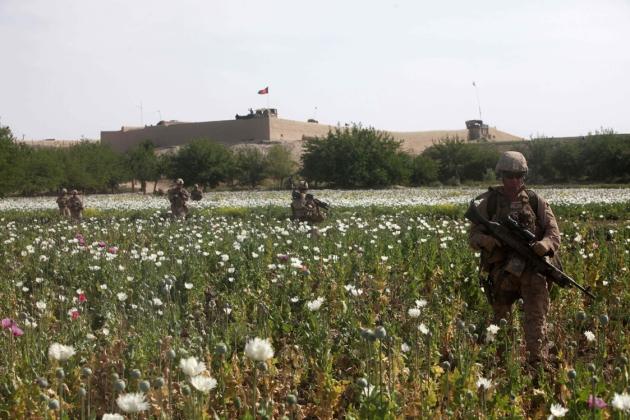 opium-fields-6