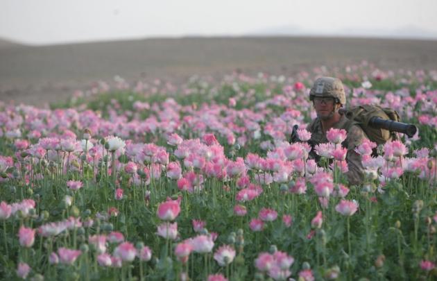 opium-fields-7