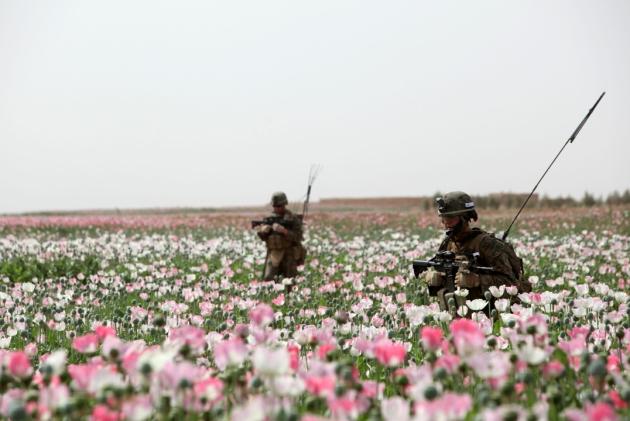 opium-fields-9