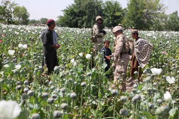 opium-fields15