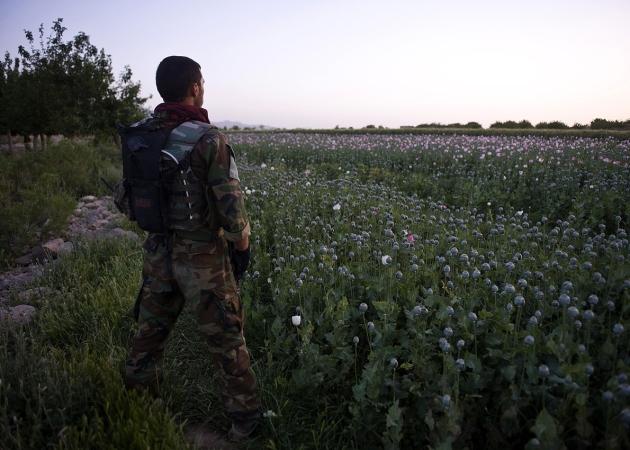 opium-fields2
